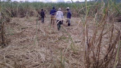 Photo of Tanzania 'is not ready' to refund sugar import duty